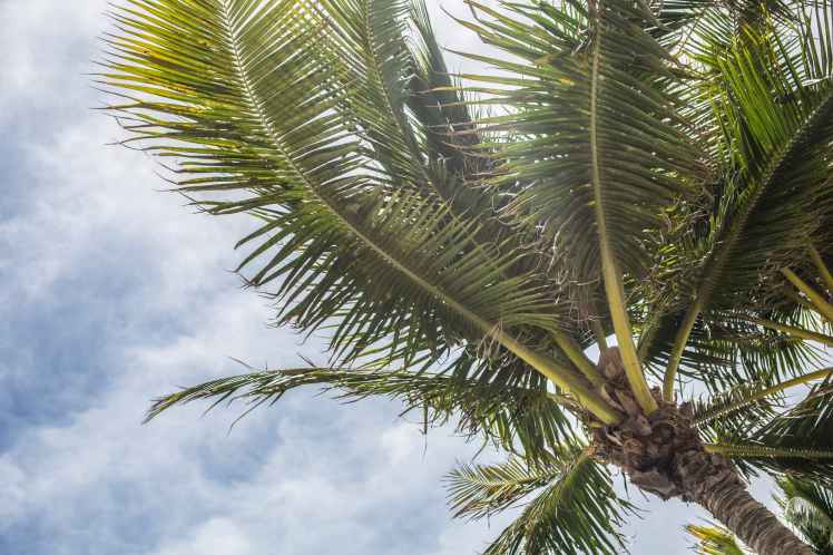 clouds cloudy skies coconut coconut trees